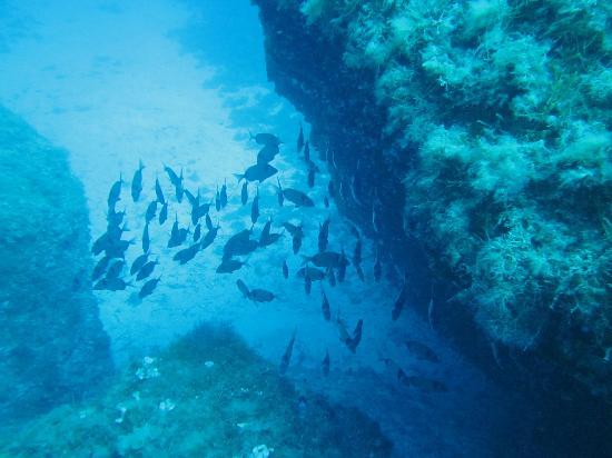Punta Javuta Immersioni Lampedusa