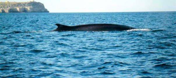 balene a lampedusa