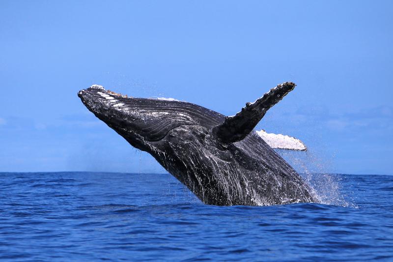 Aspettando le Balene